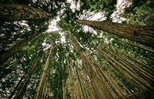 Image of trees